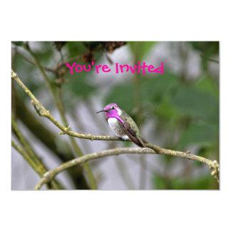 Costa's Hummingbird Personalized Announcement