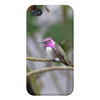 Costa's Hummingbird iPhone 4 Cover