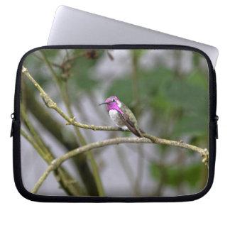 Costa's Hummingbird Laptop Computer Sleeves