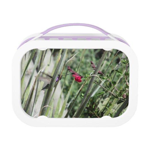 Costa's Hummingbird Yubo Lunch Boxes