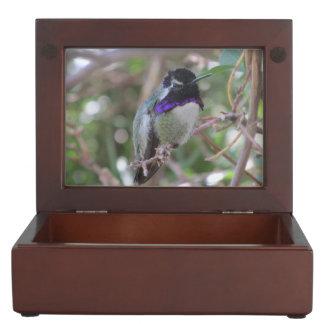Costa's Hummingbird Memory Box