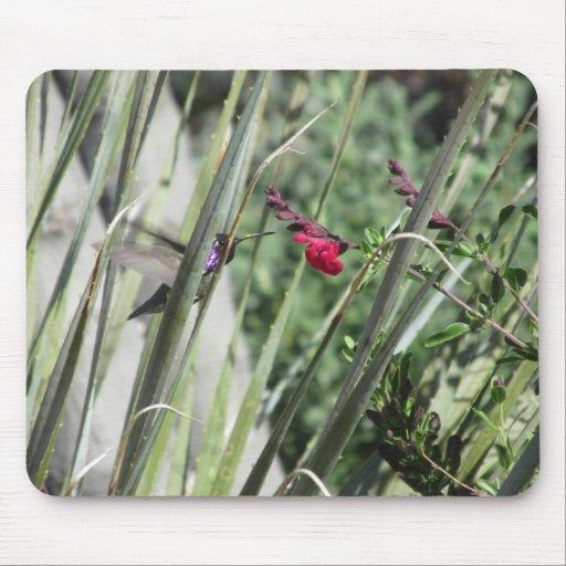 Costa's Hummingbird Mouse Pads