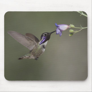 Costa's Hummingbird Mousepad