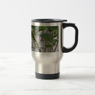 Costa's Hummingbird Coffee Mugs