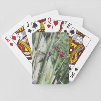 Costa's Hummingbird Deck Of Cards