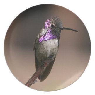 Costa's Hummingbird Dinner Plates