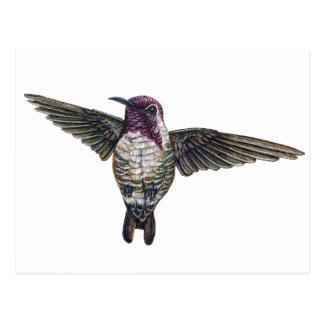 Costa's Hummingbird Post Cards