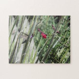 Costa's Hummingbird Puzzle