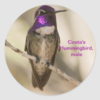 Costa's Hummingbird Round Sticker
