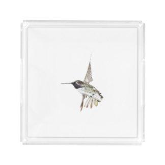 Costa's Hummingbird serving tray