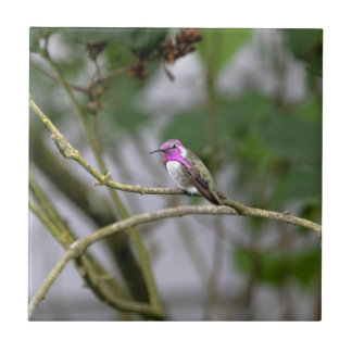 Costa's Hummingbird Small Square Tile