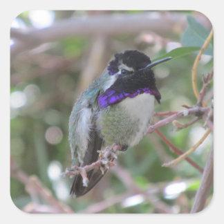 Costa's Hummingbird Square Sticker