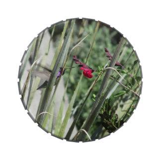 Costa's Hummingbird Candy Tin
