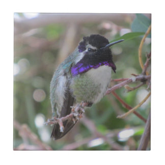 Costa's Hummingbird Tile