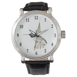Costa's Hummingbird Watch