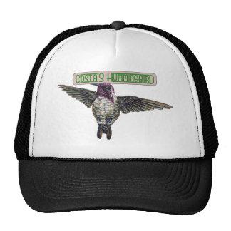 Costas Hummingbird with Banner Mesh Hats