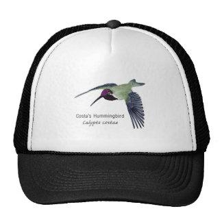Costa's Hummingbird with Name Mesh Hats