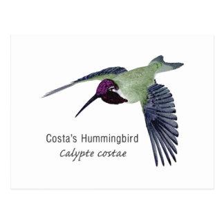 Costa's Hummingbird with Name Postcard