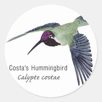 Costa's Hummingbird with Name Round Sticker