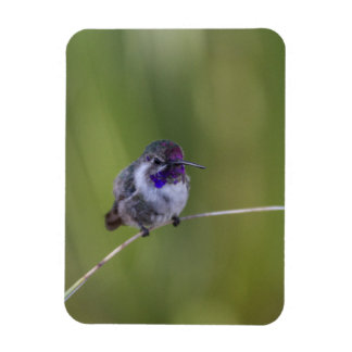 Costa's in August light Rectangular Photo Magnet