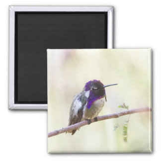 Costa's Perched on a branch Square Magnet