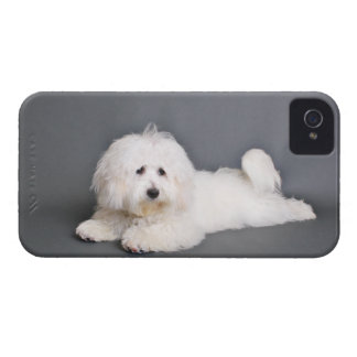 Coton de Tulear - Joci iPhone 4 Case-Mate Cases