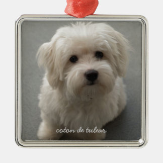 Coton de Tulear Silver-Colored Square Decoration