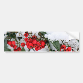 Cotoneaster Fruits with a Snow Hat Bumper Sticker