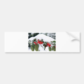 Cotoneaster Fruits with a Snow Hat Car Bumper Sticker