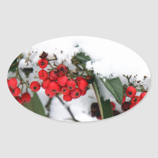 Cotoneaster Fruits with a Snow Hat Sticker