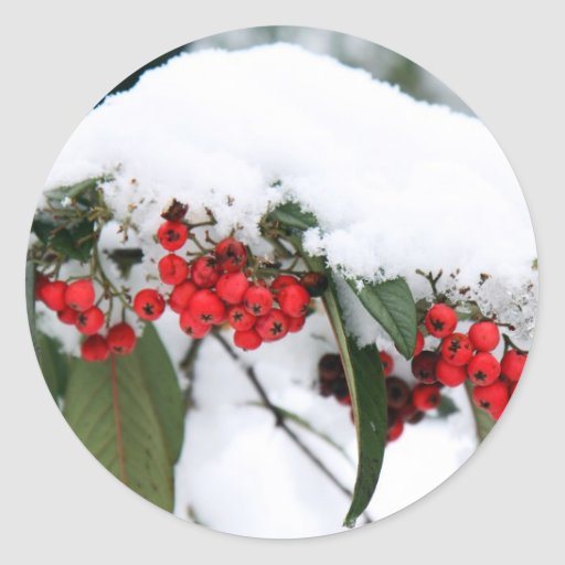 Cotoneaster Fruits with a Snow Hat Round Stickers