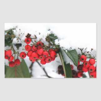 Cotoneaster Fruits with a Snow Hat Stickers