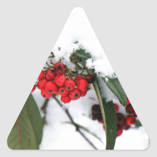 Cotoneaster Fruits with a Snow Hat Triangle Stickers