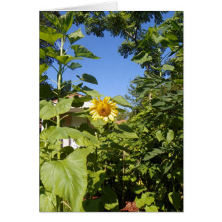 COTTAGE SUNFLOWER Greeting Card