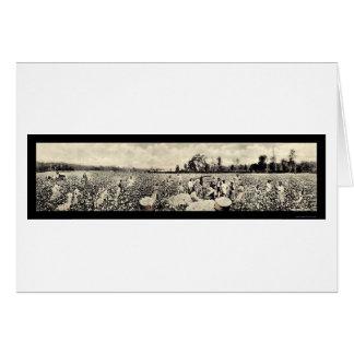 Cotton Billion Dollar Crop Photo 1915 Card