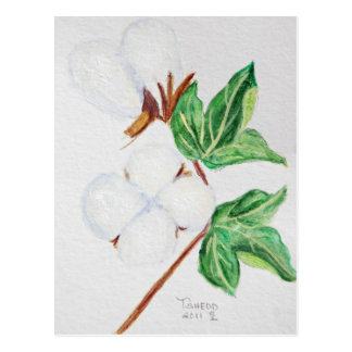 Cotton Boll Botanical Postcard White