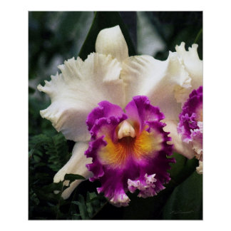 Cotton Candy Orchid V Print -20x24 -or smaller