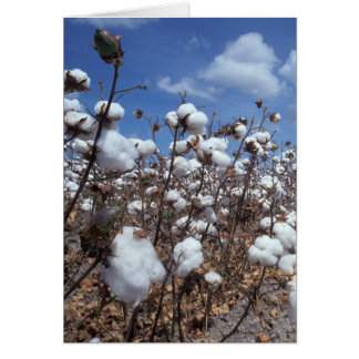 Cotton Field Card