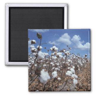 Cotton Field Square Magnet