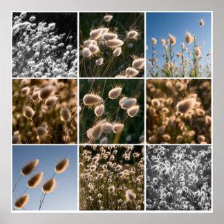 cotton grass montage poster