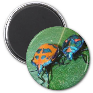 cotton harlequin bugs 6 cm round magnet