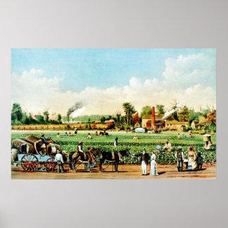 Cotton Plantation in Mississippi Poster