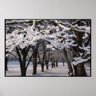 Cotton Snow Poster