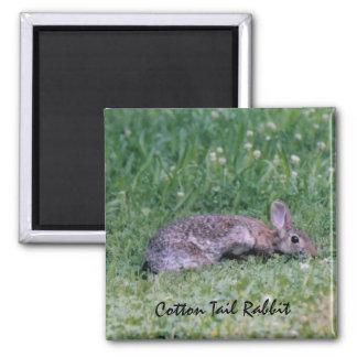 Cotton Tail Rabbit magnet
