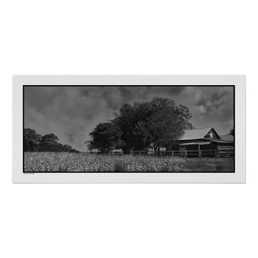 Cottonfield & Barn Poster Print