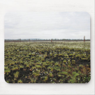 Cottongrass 1 yr postfire mouse pads