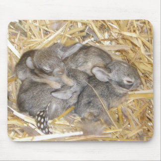Cottontail Bunnies Mouse Pad