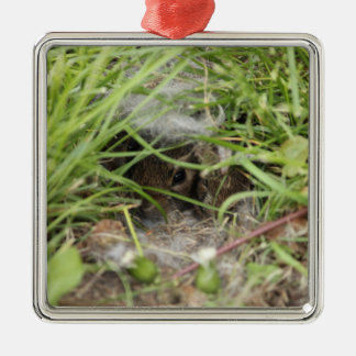 Cottontail Rabbit Babies Silver-Colored Square Decoration
