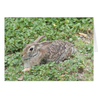 Cottontail rabbit notecard note card