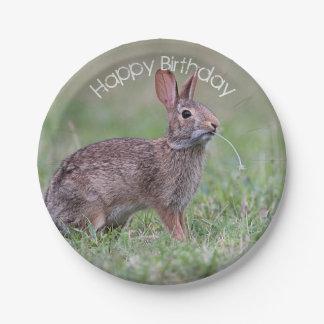 Cottontail Rabbit Paper Plate